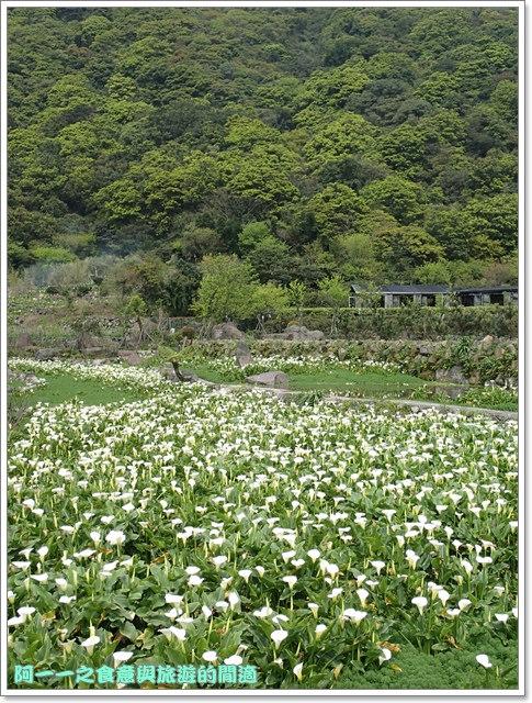 陽明山竹子湖海芋大屯自然公園櫻花杜鵑image079