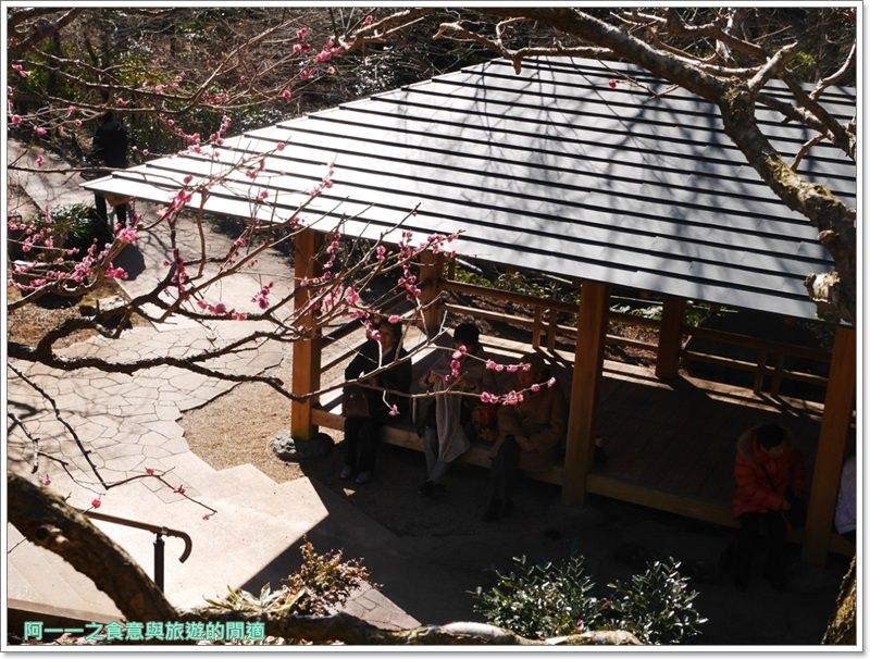 靜岡旅遊.熱海梅園.來宮站.賞花.梅花image069