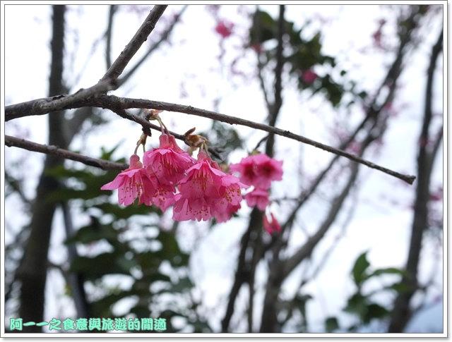 image061初鹿牧場櫻花