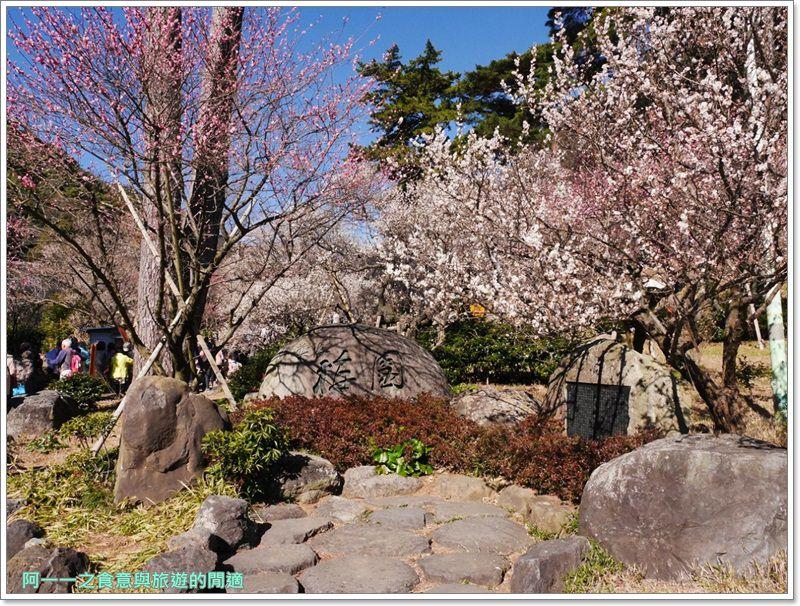靜岡旅遊.熱海梅園.來宮站.賞花.梅花image019