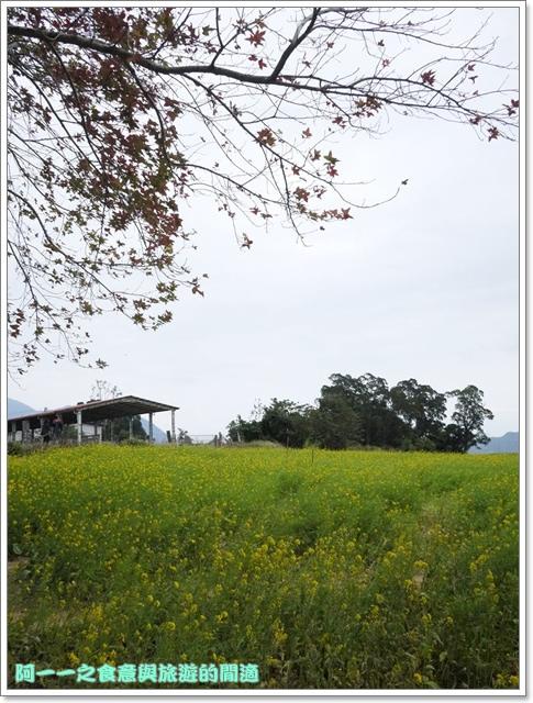 image037初鹿牧場櫻花