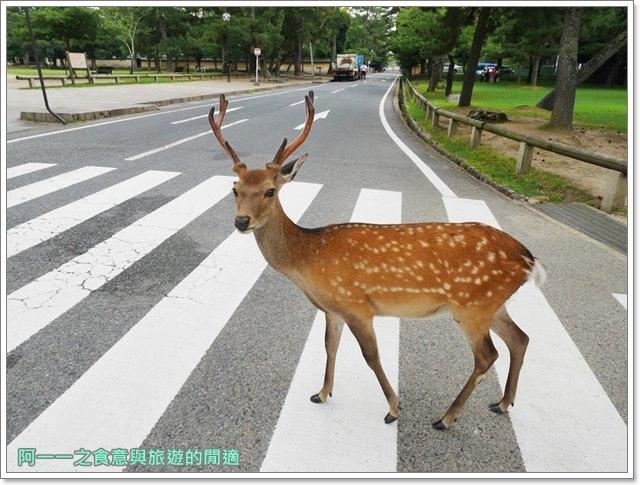 奈良.斑鳩一日卷.鹿.猿澤池.興福寺.五重塔image001