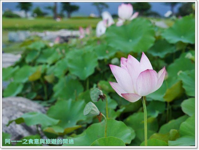 花蓮旅遊.台開心農場.洄瀾灣.吉安.親子.梅花鹿.賞花.花蓮溪口image036
