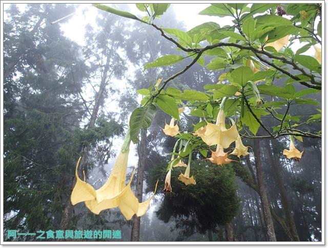 南投溪頭自然教育園區台大image021