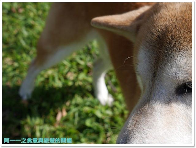 panasonic單眼相機gx7開箱12-35鏡頭資訊月image042