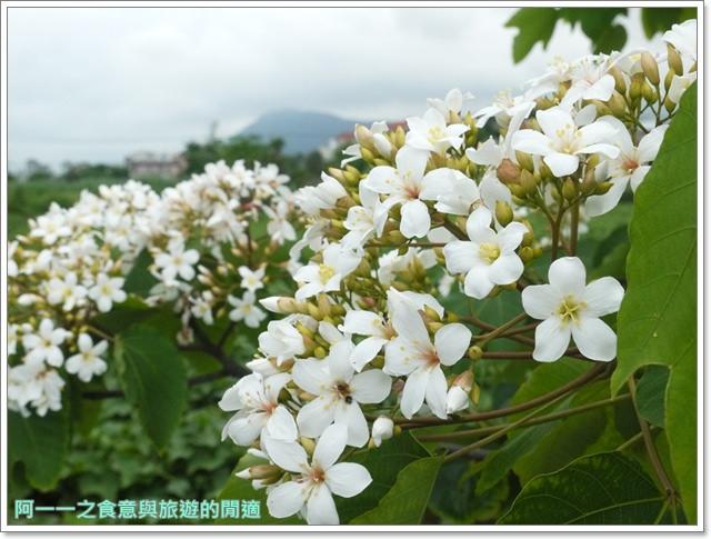 花蓮吉安中園桐花步道鬱金香花園image037