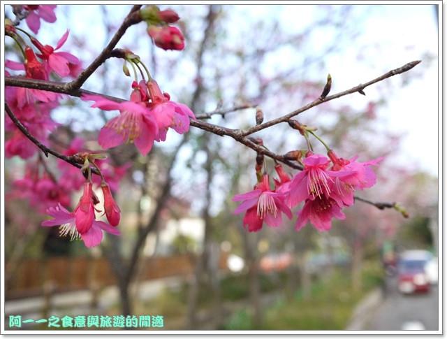 image063桃園客家文化館櫻花