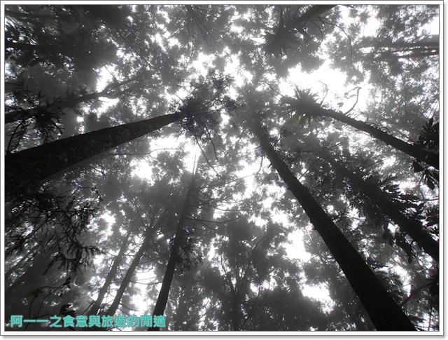 南投溪頭自然教育園區台大image019