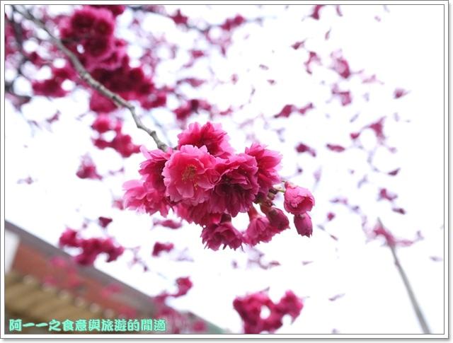image083桃園客家文化館櫻花