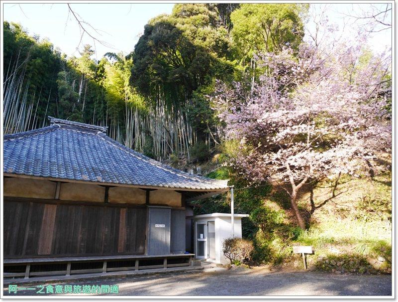 河津櫻.靜岡伊豆.日本自助旅遊.交通.攻略image070