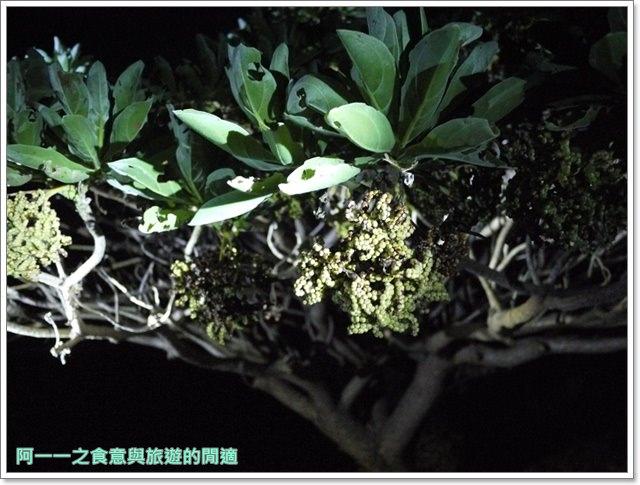 台東旅遊景點夜訪小野柳釋迦冰淇淋image015