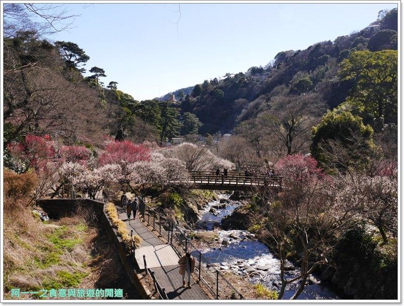 靜岡旅遊.熱海梅園.來宮站.賞花.梅花image039