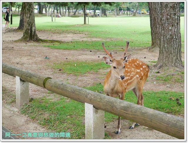 奈良.斑鳩一日卷.鹿.猿澤池.興福寺.五重塔image043