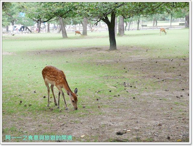 奈良.斑鳩一日卷.鹿.猿澤池.興福寺.五重塔image042
