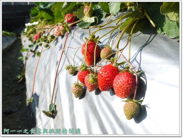 苗栗大湖草莓酒莊花間集image027