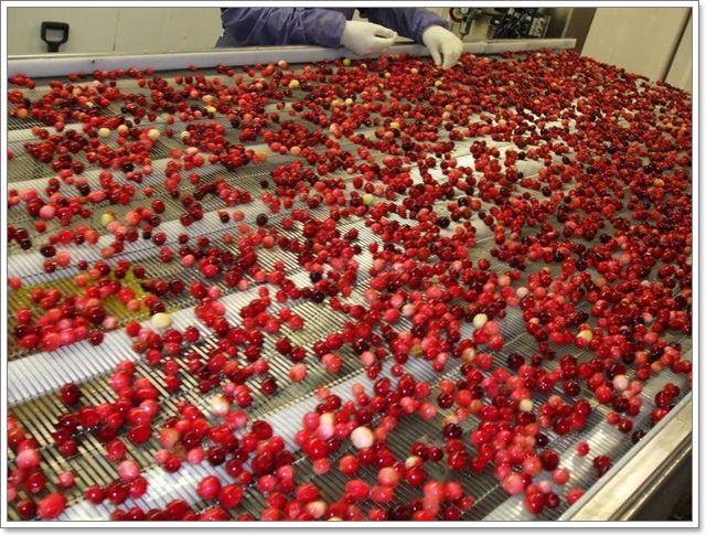 RIC水果行加拿大進口雪國農場天然果乾伴手禮零嘴image013