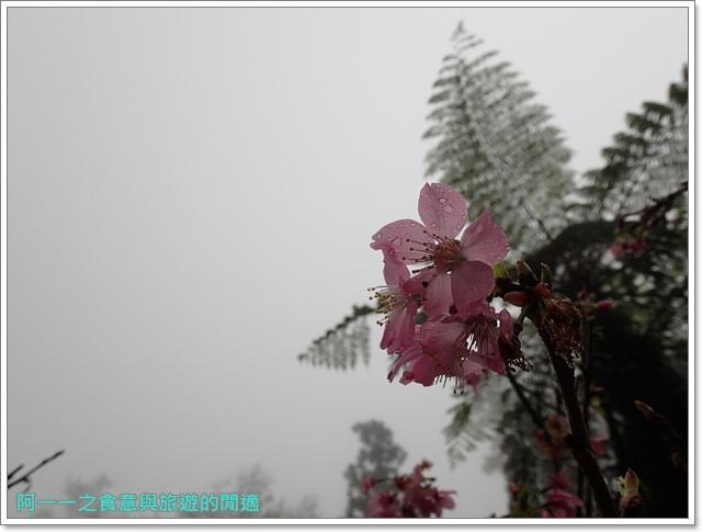 南投溪頭自然教育園區台大image041