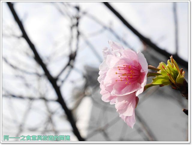 捷運中正紀念堂景點櫻花海綿寶寶暢遊比奇堡特展image071