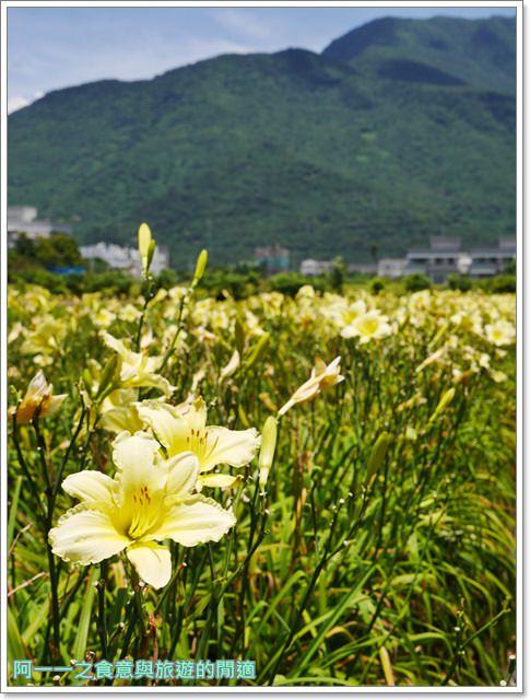 花蓮金針花.吉安.嘉德萱草花田.賞花.花蓮旅遊image024
