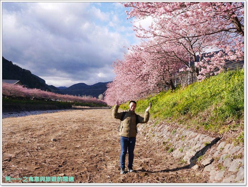 河津櫻.靜岡伊豆.日本自助旅遊.交通.攻略image063