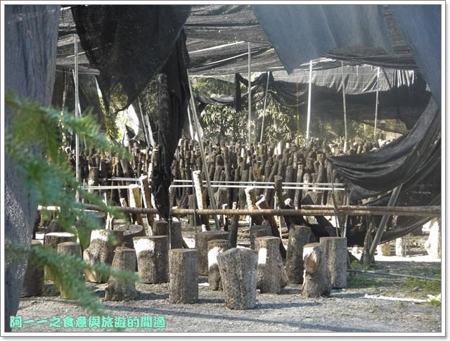 南投武界段木香菇一線天image011