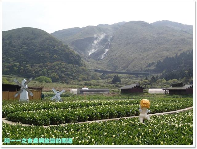 陽明山竹子湖海芋大屯自然公園櫻花杜鵑image087