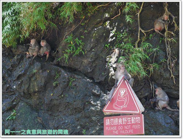 台東旅遊.泰源幽谷.登仙橋.台灣獼猴.東河橋.東部海岸image034