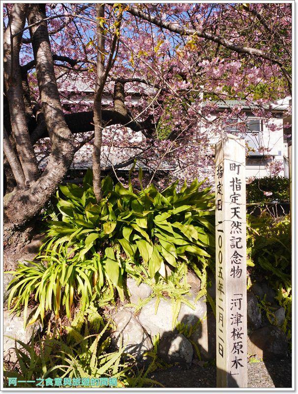 河津櫻.靜岡伊豆.日本自助旅遊.交通.攻略image055