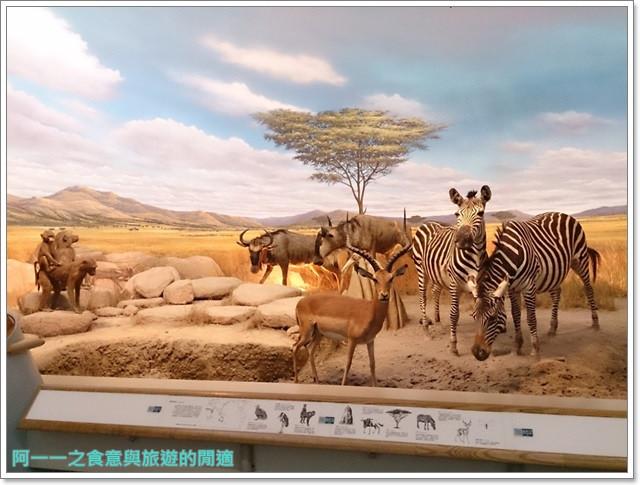 台中親子旅遊景點木乃伊國立自然科學博物館恐龍渾天儀水鐘image021