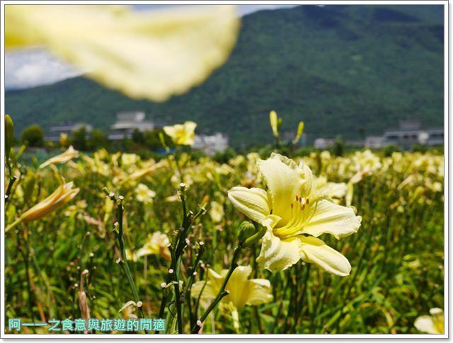花蓮金針花.吉安.嘉德萱草花田.賞花.花蓮旅遊image025