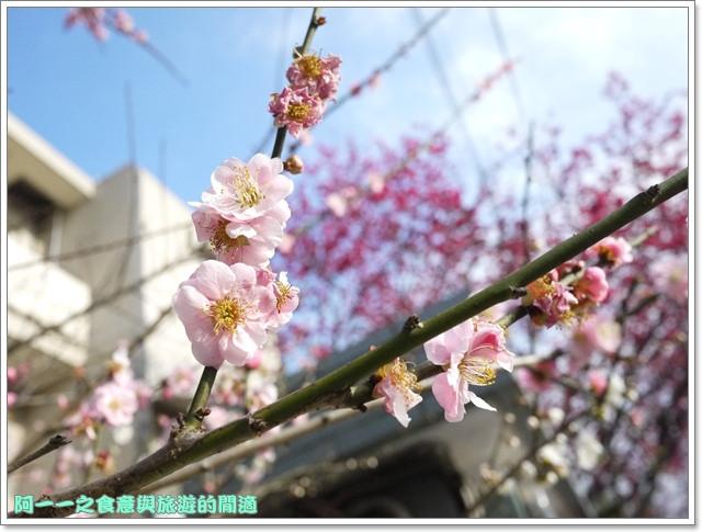 image093桃園客家文化館櫻花