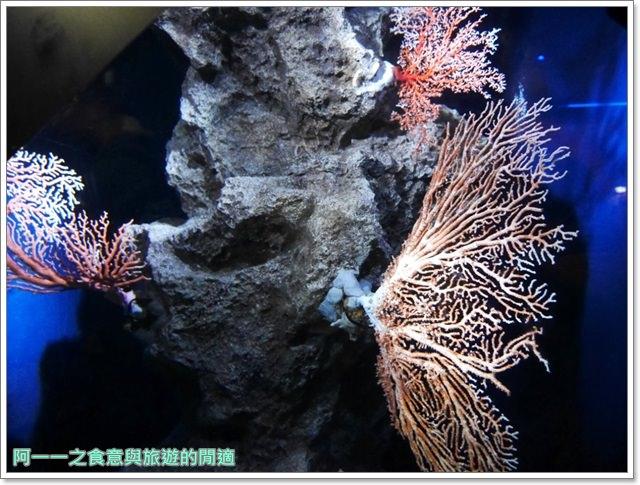 沖繩美麗海水族館.海洋博紀念公園.海豚秀.親子旅遊image060