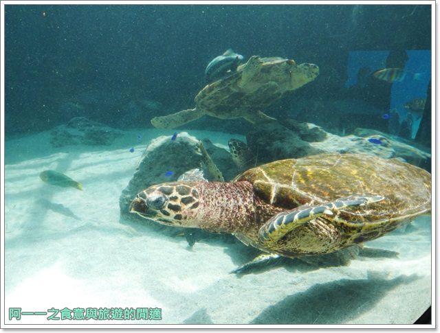 沖繩美麗海水族館.海洋博紀念公園.海豚秀.親子旅遊image071