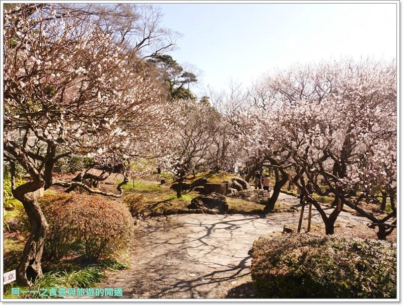 靜岡旅遊.熱海梅園.來宮站.賞花.梅花image022