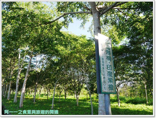 鹿野森活民宿.台東熱氣球.住宿.早餐.鸞山.貓咪image008