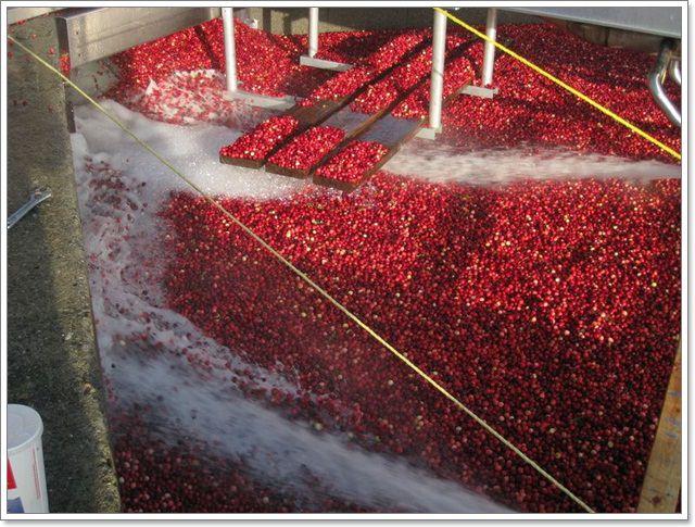RIC水果行加拿大進口雪國農場天然果乾伴手禮零嘴image012