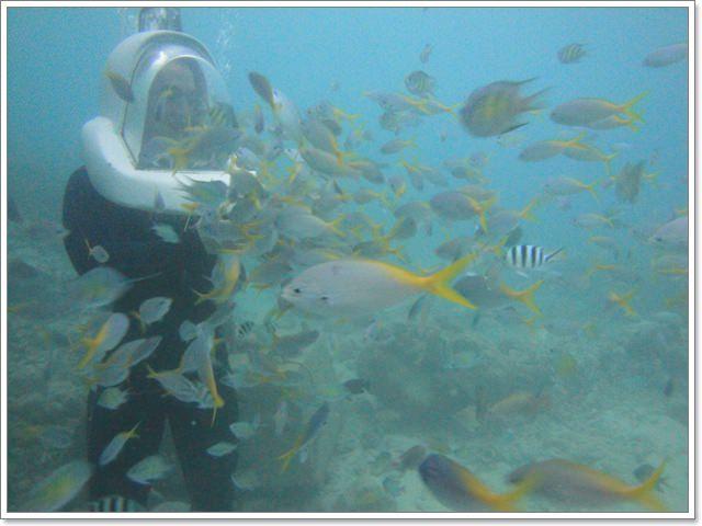 阿威水上活動中心 海底漫步與熱帶魚共遊~阿一一帛琉藍色海洋之旅