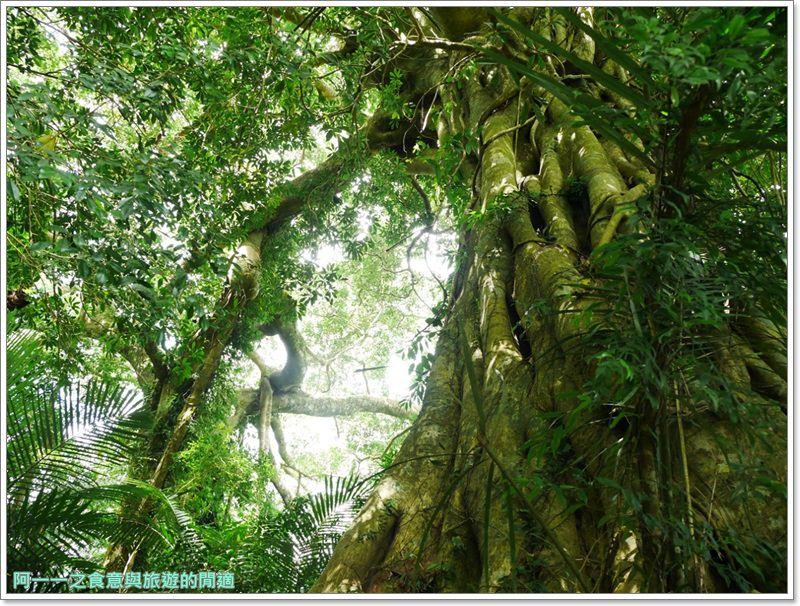 鸞山森林博物館.台東景點.祕境.會走路的樹.阿凡達image012