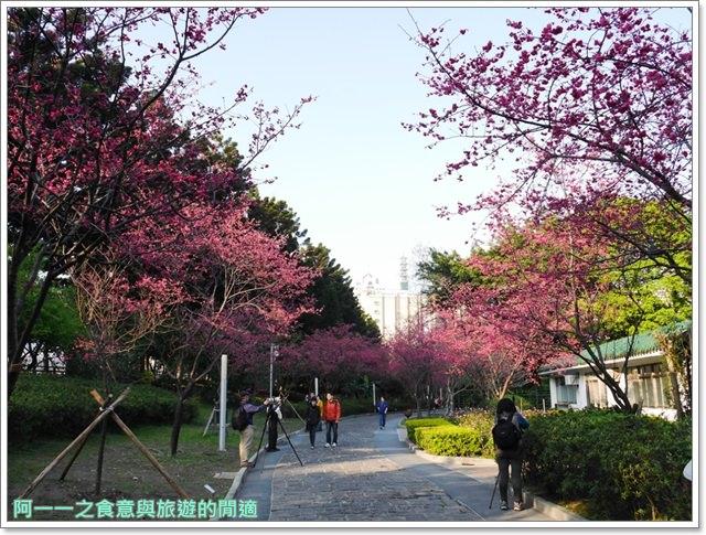 捷運中正紀念堂景點櫻花海綿寶寶暢遊比奇堡特展image059