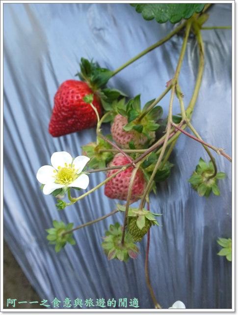 苗栗大湖草莓酒莊花間集image019
