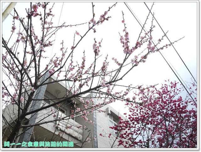 image089桃園客家文化館櫻花