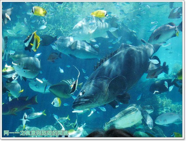 沖繩美麗海水族館.海洋博紀念公園.海豚秀.親子旅遊image028