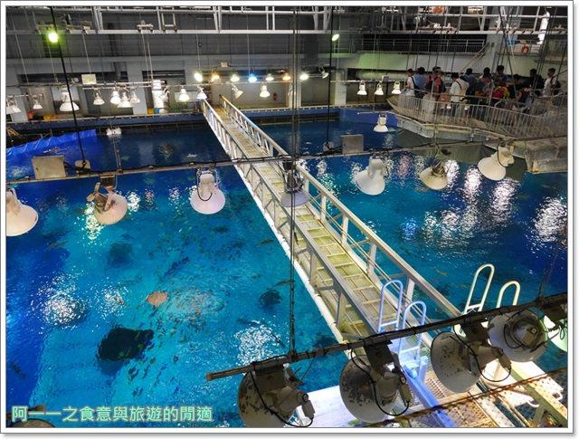 沖繩美麗海水族館.海洋博紀念公園.海豚秀.親子旅遊image052