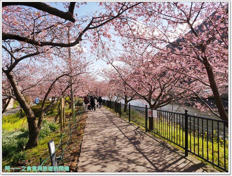 河津櫻.靜岡伊豆.日本自助旅遊.交通.攻略image020