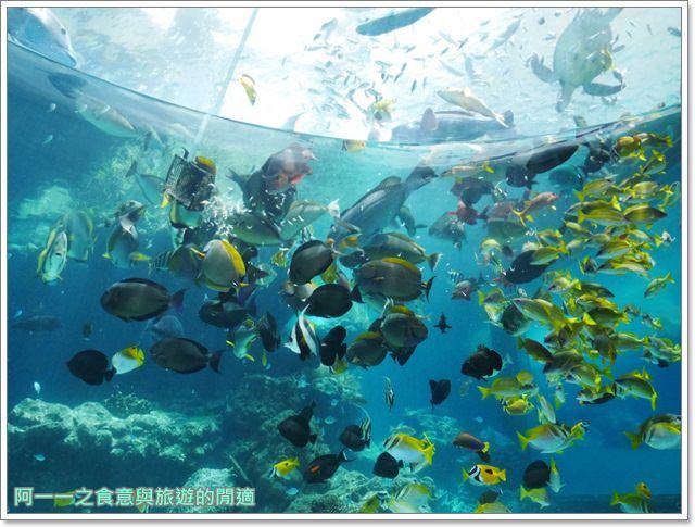 沖繩美麗海水族館.海洋博紀念公園.海豚秀.親子旅遊image002
