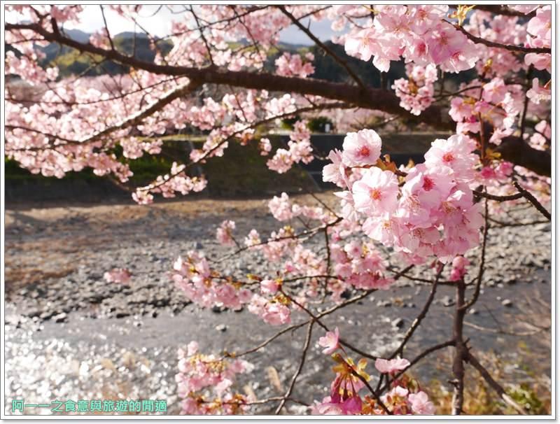 河津櫻.靜岡伊豆.日本自助旅遊.交通.攻略image048