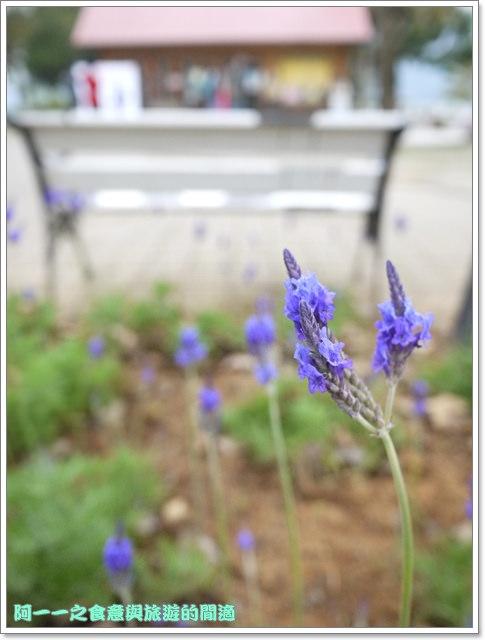 image017初鹿牧場櫻花