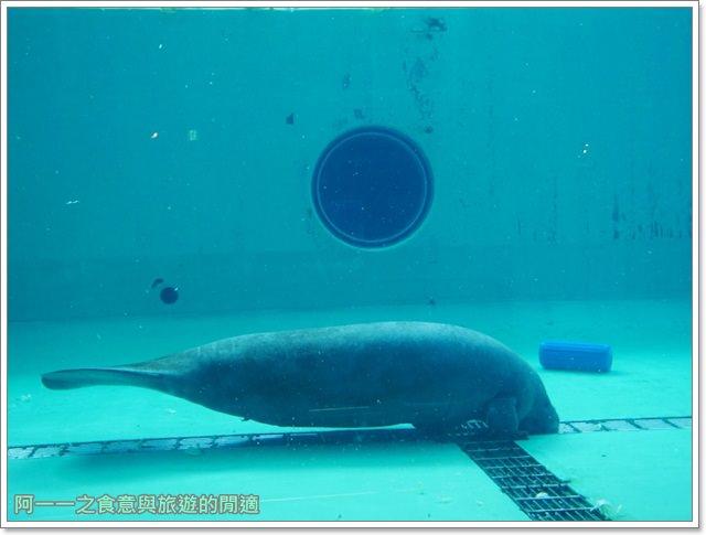 沖繩美麗海水族館.海洋博紀念公園.海豚秀.親子旅遊image065