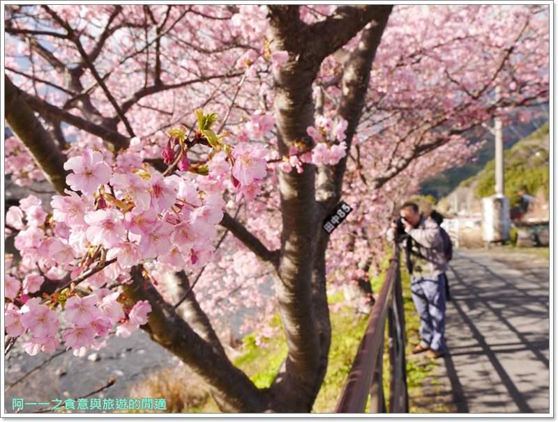 河津櫻.靜岡伊豆.日本自助旅遊.交通.攻略image047