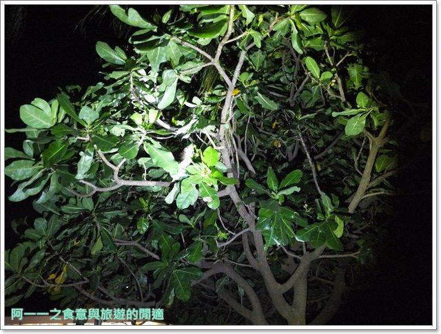 台東旅遊景點夜訪小野柳釋迦冰淇淋image009